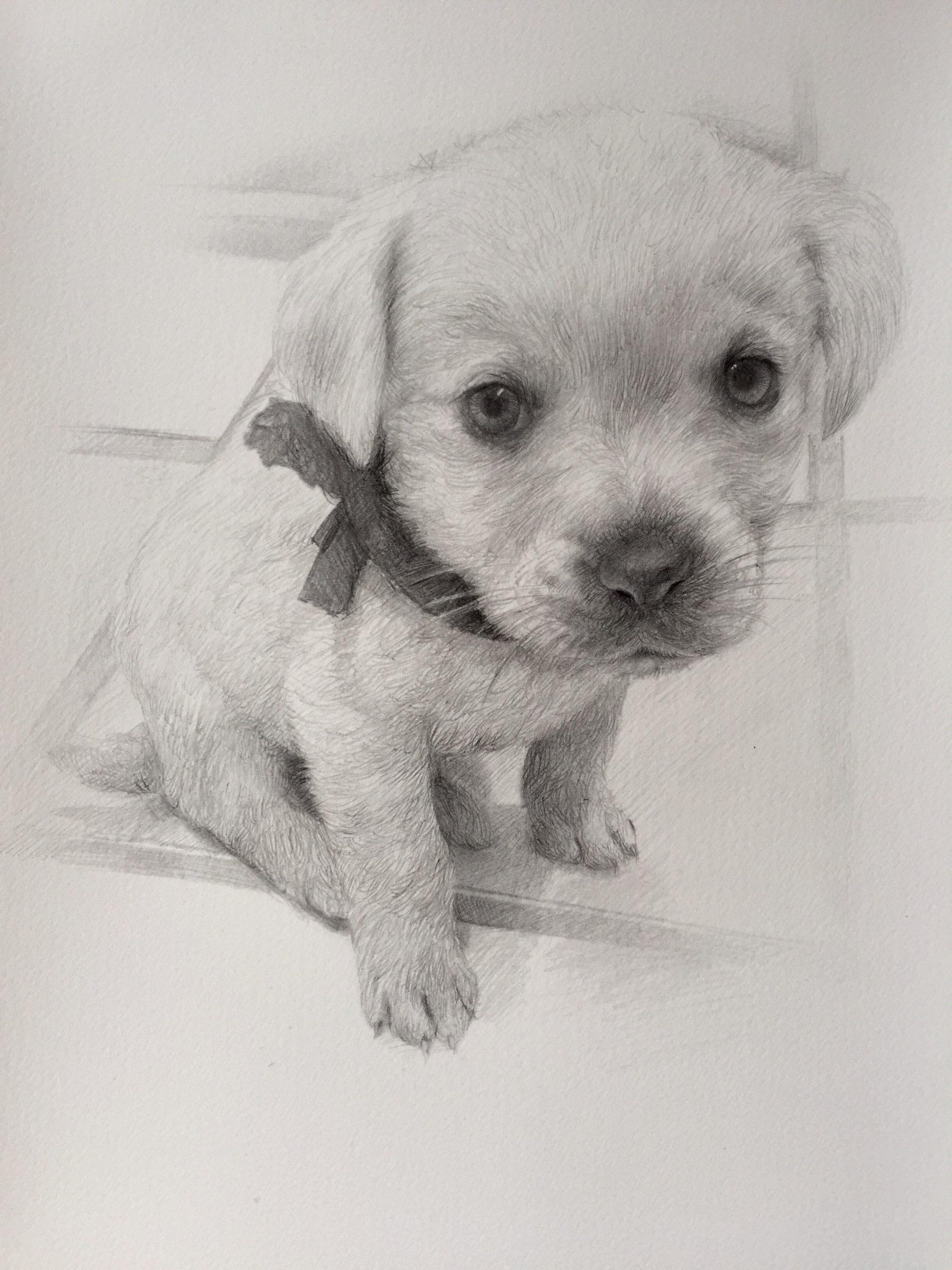 Dibujos A Lapiz De Perro Retratos A Lapiz