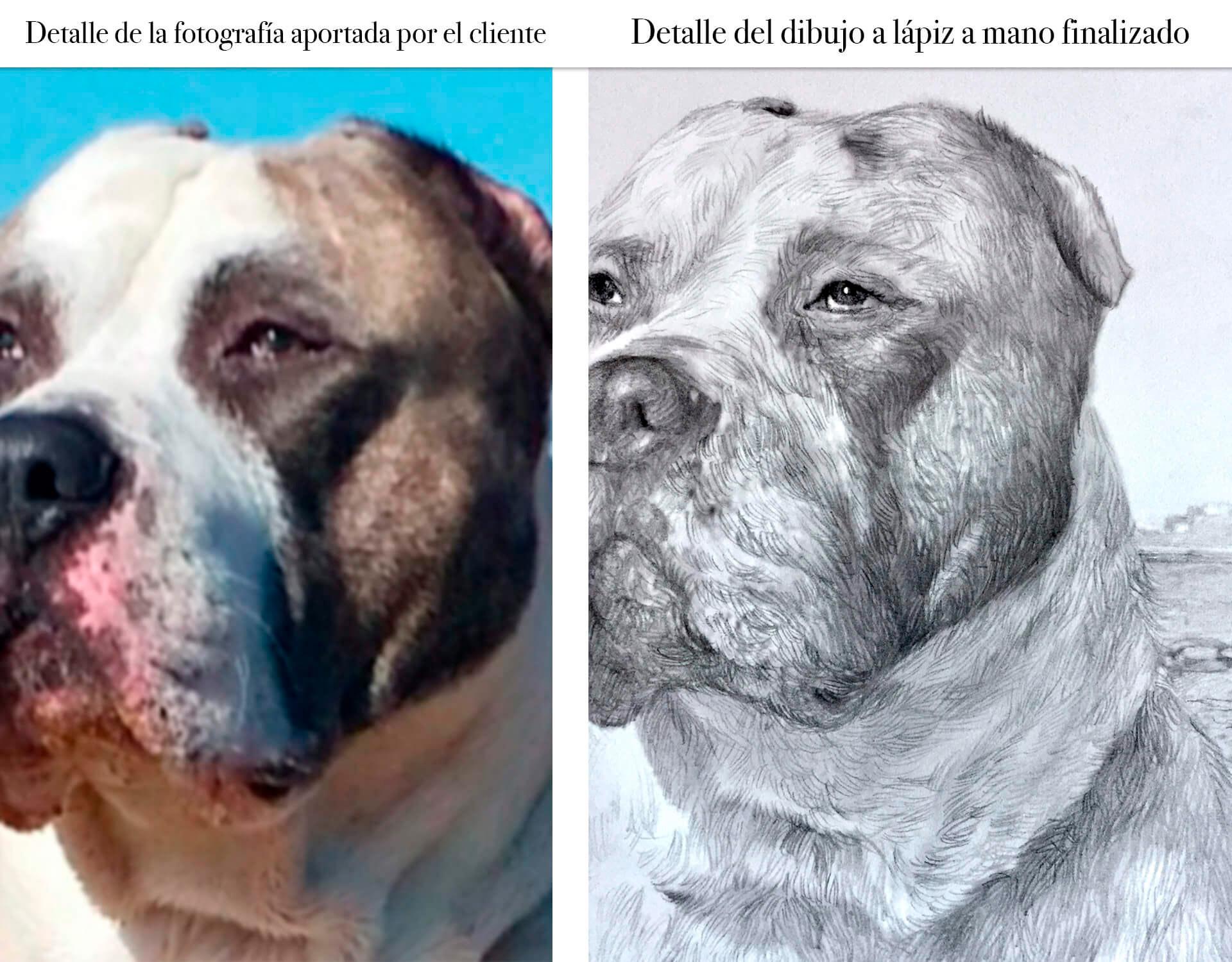 dibujo-a-lapiz-perro
