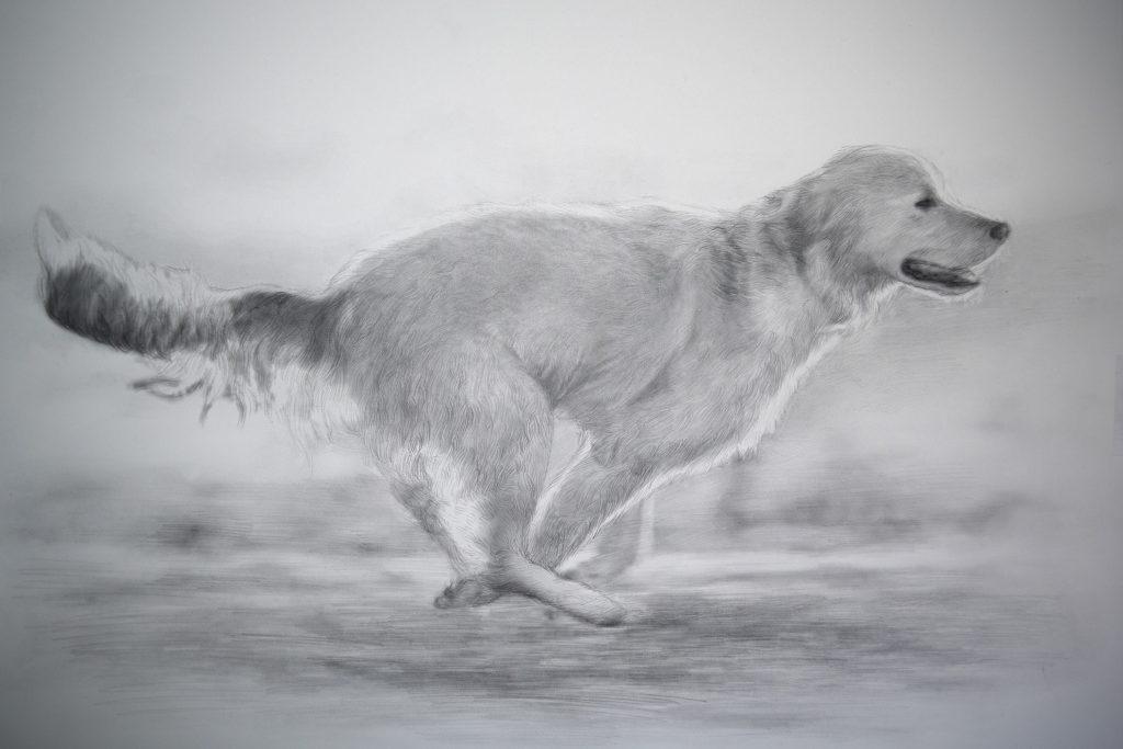 dibujo de perro corriendo a lápiz