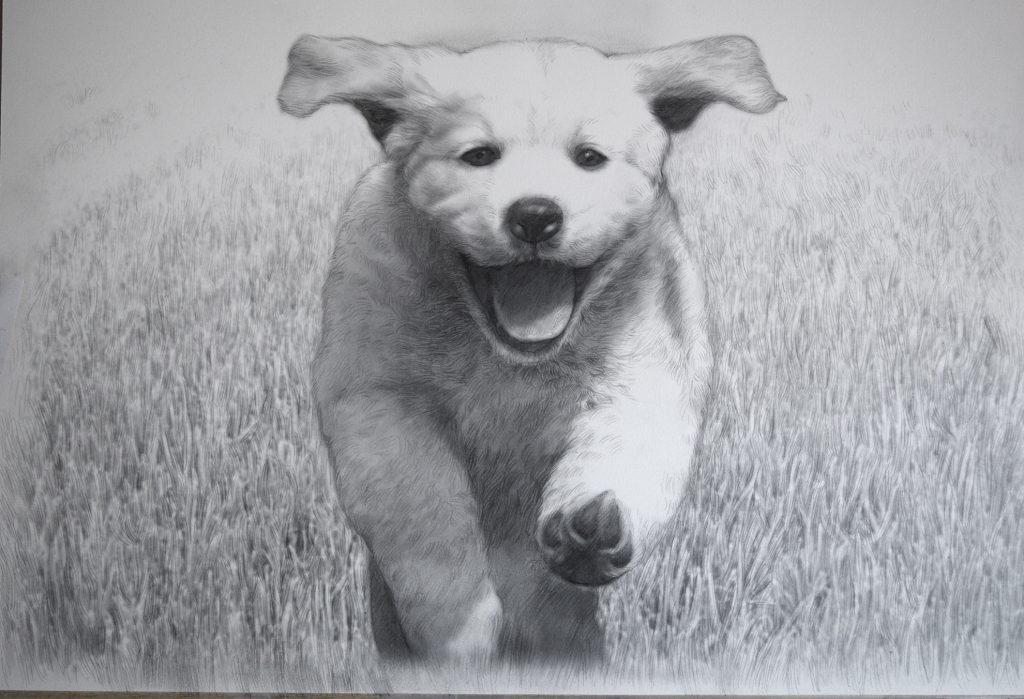 dibujo de perrito corriendo a lapiz