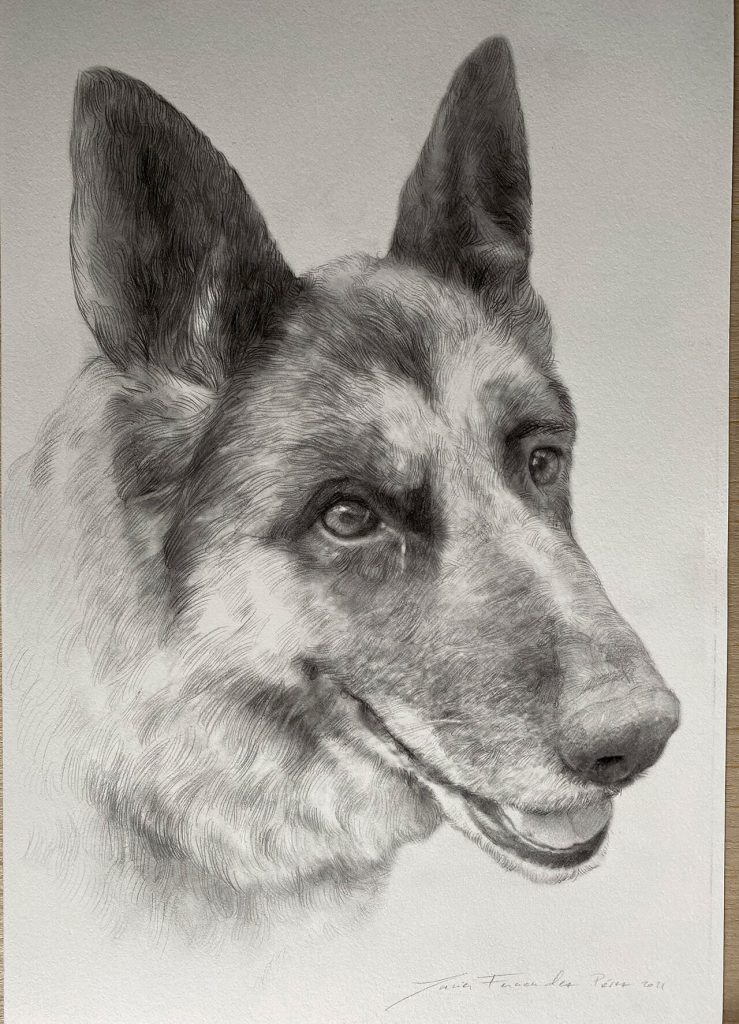 dibujo-a-lapiz-de-perro