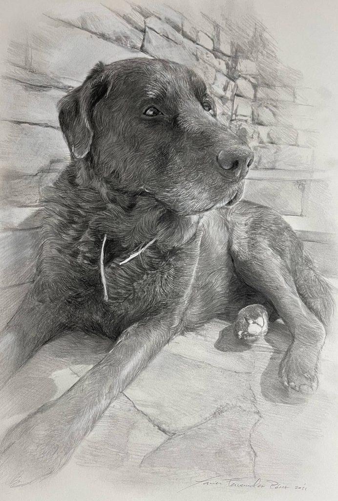 retrato a lápiz de perro